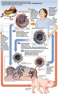 200px-AntigenicShift_HiRes